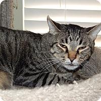 Adopt A Pet :: Georgio - Mesa, AZ