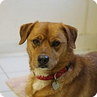Adopt A Pet :: Buddha - Carey, OH