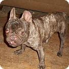 Adopt A Pet :: Hershery