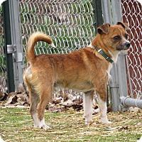 Adopt A Pet :: Freddie - Meridian, ID