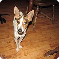 Adopt A Pet :: Rosie - Rocky Mount, NC