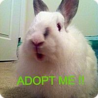 Adopt A Pet :: Clyde - Conshohocken, PA