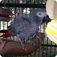 Adopt A Pet :: Phineas & Pheobe - Punta Gorda, FL