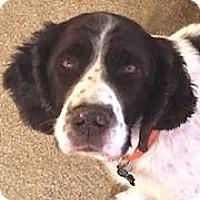 Adopt A Pet :: Hunter - Minneapolis, MN