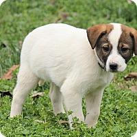Adopt A Pet :: Patrick - Windham, NH