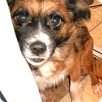 Adopt A Pet :: Fleurette - Memphis, TN