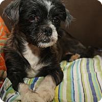 Adopt A Pet :: Elle - New York, NY