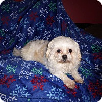 Adopt A Pet :: Selena - ADOPTED!! - Antioch, IL