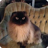 Adopt A Pet :: Precious Parker - Columbus, OH
