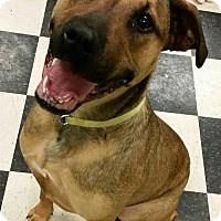 Adopt A Pet :: Saphira 1 YR OLD - Struthers, OH