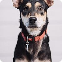 Adopt A Pet :: Jagar Prince - Portland, OR