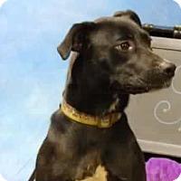 Adopt A Pet :: Daisy - East McKeesport, PA