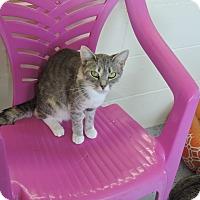 Adopt A Pet :: Chloe - Washington, GA
