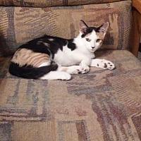 Adopt A Pet :: Blossom - Montello, WI