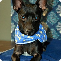 Adopt A Pet :: Shadow - Okeechobee, FL