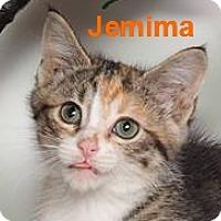 Adopt A Pet :: Jemima - Baton Rouge, LA