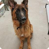 Adopt A Pet :: OMEGA - Littleton, CO