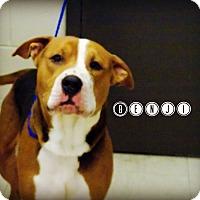 Adopt A Pet :: Benji - Defiance, OH
