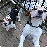 Adopt A Pet :: Desmond and Doss - Saranac Lake, NY