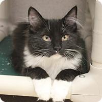 Adopt A Pet :: Strella - Naperville, IL