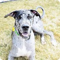 Adopt A Pet :: Brody Boy - Salt Lake City, UT