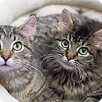 Adopt A Pet :: Cody & Cheyenne - Chicago, IL