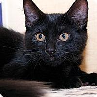 Adopt A Pet :: Eva - Irvine, CA