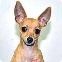 Adopt A Pet :: Chloe - Port Washington, NY