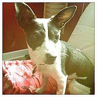 Adopt A Pet :: Tansy - Rockaway, NJ