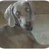 Adopt A Pet :: Mowgli  **ADOPTED** - Eustis, FL