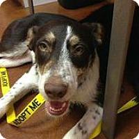 Adopt A Pet :: Blake Shelton - Austin, TX