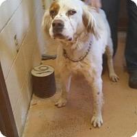 Adopt A Pet :: Biffington - Wood Dale, IL