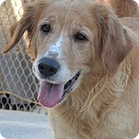 Adopt A Pet :: Sandy - Danbury, CT
