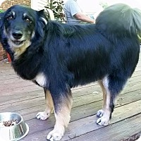 Adopt A Pet :: Diesel-Courtesy Post - North Olmsted, OH