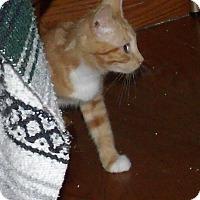Adopt A Pet :: MAGNOLA - Acme, PA