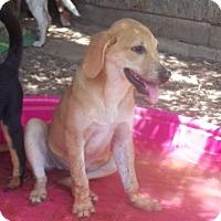 Adopt A Pet :: Sheila-pending adoption - East Hartford, CT
