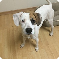 Adopt A Pet :: Patch in CT - East Hartford, CT