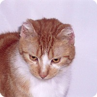 Adopt A Pet :: Charlie Brown(loves people)l - Sterling Hgts, MI