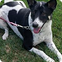 Adopt A Pet :: 'MAYA' - Agoura Hills, CA