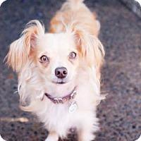Adopt A Pet :: Benny - Eugene, OR