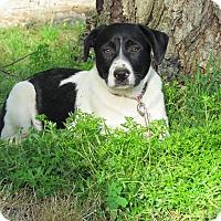 Adopt A Pet :: MILES - Bedminster, NJ