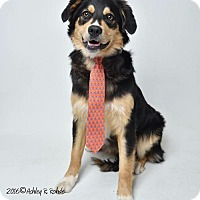 Adopt A Pet :: Hayden - Kenner, LA