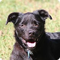 Terrier (Unknown Type, Medium)/Retriever (Unknown Type) Mix Dog for adoption in Prince Frederick, Maryland - Greta