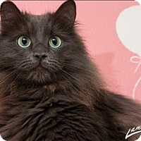 Adopt A Pet :: Babie - Sherwood, OR