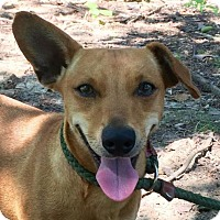 Adopt A Pet :: Riley - Allentown, PA