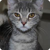 Adopt A Pet :: Jazz - Ridgeland, SC