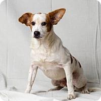 Adopt A Pet :: Tommy - Tulsa, OK