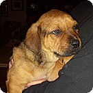 Adopt A Pet :: Camden/Donell's Pup Rolo