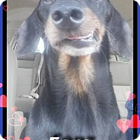 Adopt A Pet :: Fonz - Green Cove Springs, FL