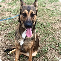 German Shepherd Dog Mix Dog for adoption in Greeneville, Tennessee - Kamarie (Cat Friendly)